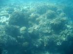 Het Groot Barrièrerif is het grootste koraalrif ter wereld en is gelegen voor de kust van Queensland. Deze rifstructuur bestaat uit miljoenen kleine koraalpoliepen.