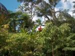Bezoek aan de Flecker Botanic Gardens in Cairns.