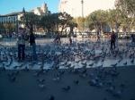 Plaça de Catalunya is een druk centraal gelegen plein. Er zijn er zeer veel duiven op en rond het plein.