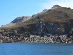Tienduizenden Jan-Van-Genten op het eiland Rouzic, één van de 'zeven' eilanden voor de kust van Perros-Guirec