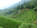 In Longli klimmen we langs de heuvels met rijstvelden. We zien onderweg vrouwen in hun traditionele Yao of Zhuang klederdracht. Boven wacht ons een adembenemend zicht op de berghellingen vol met terrassen voor de rijst.