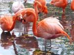 De Zoo van Dresden ligt in de zuidwesthoek van de Grosser Garten. Inmiddels zijn er zo'n 400 verschillende soorten dieren te zien. Er is ook een 'ondergrondse dierentuin' voor allerlei soorten nachtdieren.