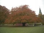 Rosenborg park in herfsttooi.
