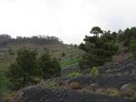 Zwart vulkaanzand en groene wijngaarden in Fuencaliente