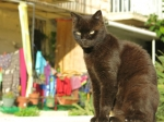 Er zijn heel veel zwerfkatten op Malta. Vele worden door de Maltese dierenliefhebbers gevoed en gehuisvest. In St Julians is er zelfs een heuse Cat Village met een kattencafé, een kattentuin en slaapgelegenheid.