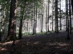 Het bos in het arboretum van Robert Leloir.