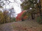 Mooie herfstkleuren op de Petrin heuvel