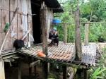 Het Akha dorp in Thatorn is op enkele ouderen na verlaten. De jongeren zijn de mais oogst aan het binnenhalen.