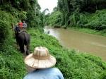 In het olifantenkamp van Chiang Dao maken we kennis met het grootste zoogdier van Zuidoost-Azië en maken een ritje op hun rug.