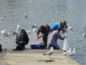 De vissers kuisen hun vangst in de haven van Kinsale. De meeuwen hopen op een deel van de buit.