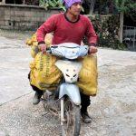 De jonge Akha brengen de mais oogst uit de heuvels per brommer naar het dorp.