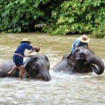 De olifanten van Chiang Dao worden door hun verzorgers gewassen in de rivier.