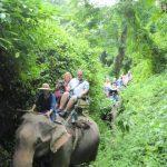 De trage, schommelende gang van de olifant en de stilte van het ons omringende regenwoud brengt ons tot rust.