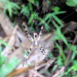 Op spinnenjacht tijdens onze wandeling naar het dorpje van de rode Karen.