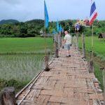 We bezoeken de Wat Su Thong Pae tempel die we via de langste bamboebrug van Thailand over de rijstvelden bereiken.