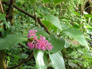 De tropische serre in de botanische tuin van de Grosser Garten.