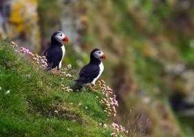 IJsland – natuurelementen in actie